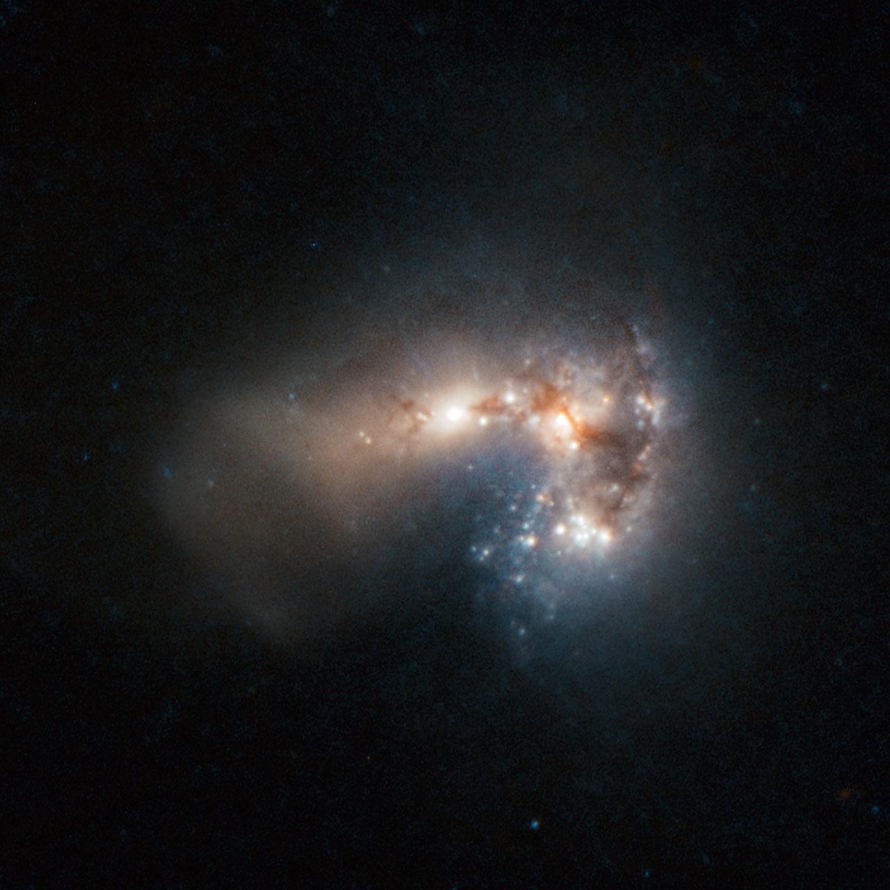 Frenzied star birth in Haro 11