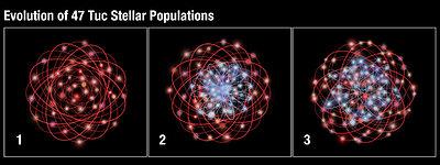 Evolution of 47 Tuc stellar populations