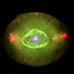 Hubble's Planetary Nebula Gallery. A View of NGC 6826