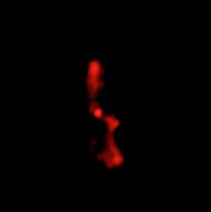 Radio Image of Galaxy Cluster MS 0735