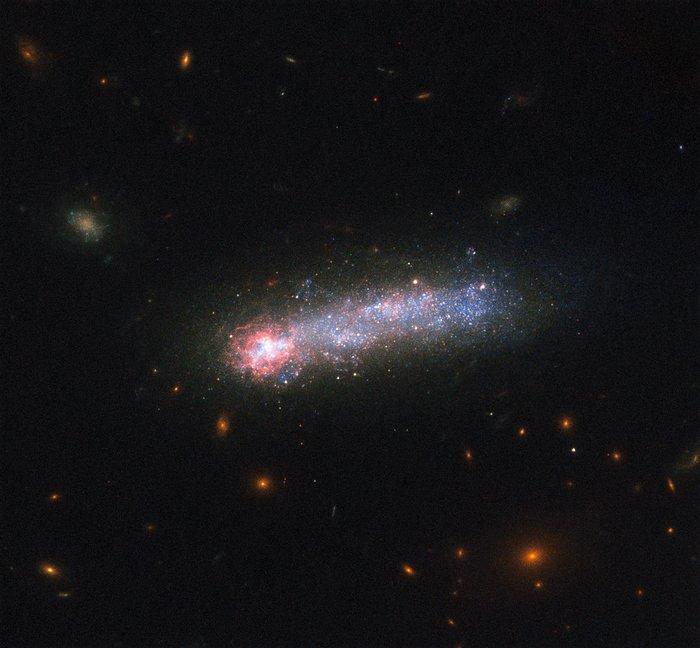 LEDA 36252, um girino cósmico