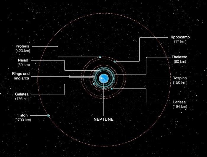 Orbits of Neptune's inner moons