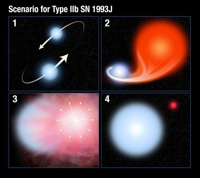 Scenario for Type IIb supernova 1993J