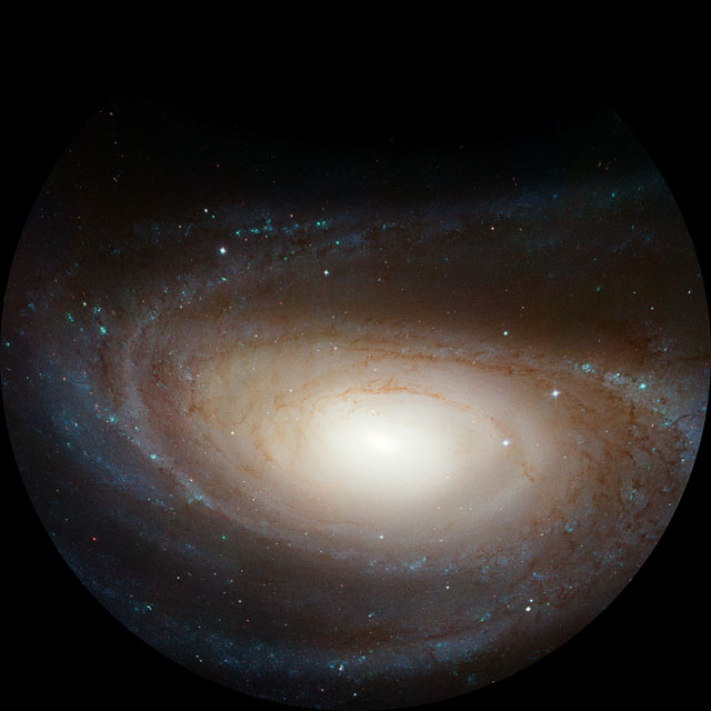 The spiraling vortex of M81